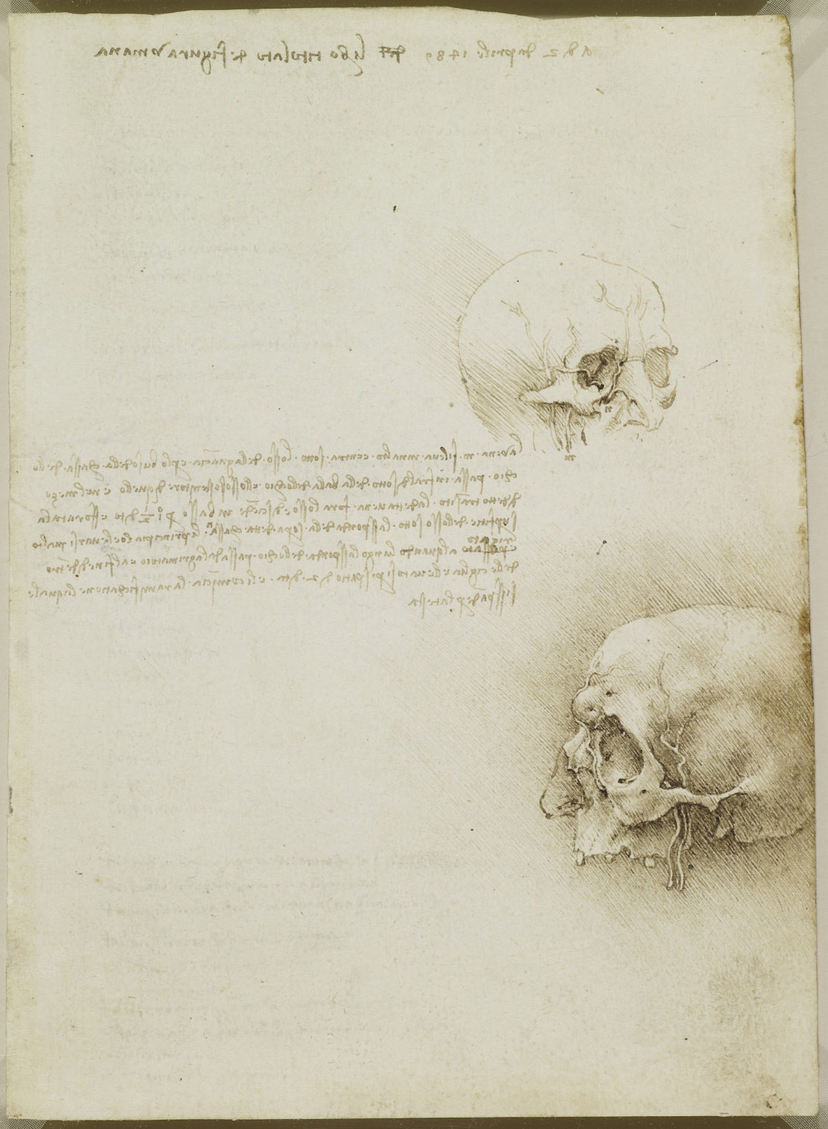 The cranium sectioned. Verso: The skull sectioned 1489