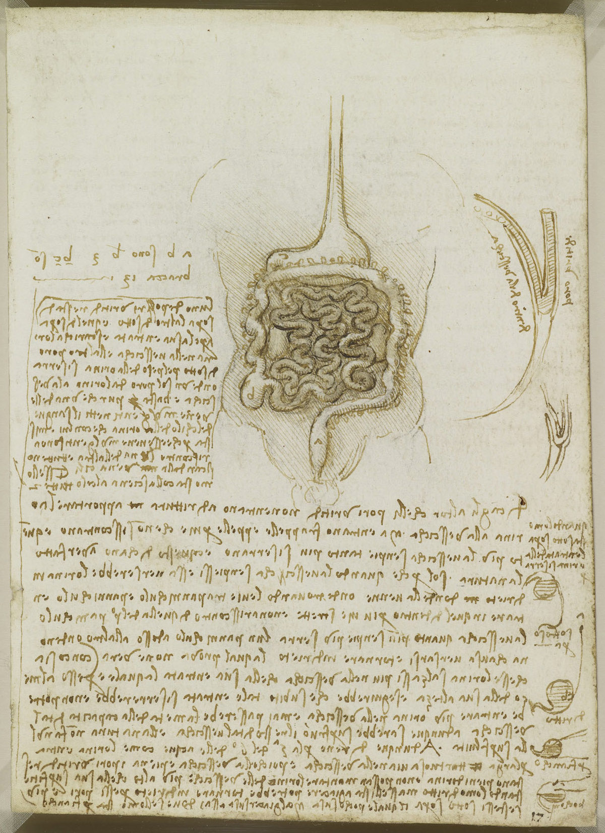 The gastrointestinal tract, and the bladder. 1508