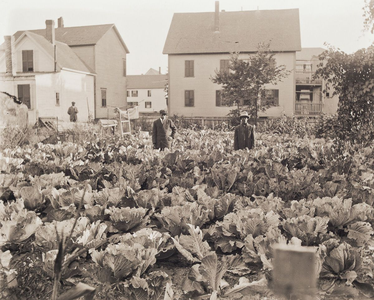 c. 1902 Portrait of Edward Perkins in His Garden. Camden migrant Edward Perkins poses in his lush garden of collard greens in the Beaver Brook neighborhood, demonstrating the literal transplantation of Southern culture to the North.
