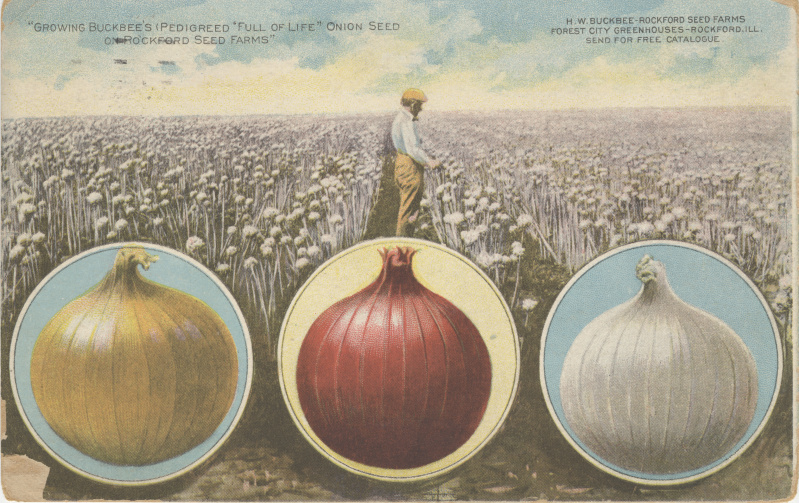 victorian trade cards Buckbee's onion seed