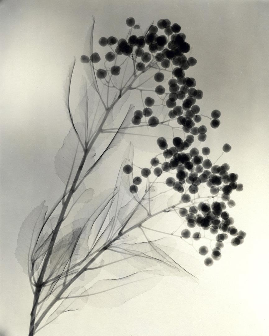 Dr.-Dain-L.-Tasker-California-Holly-1937