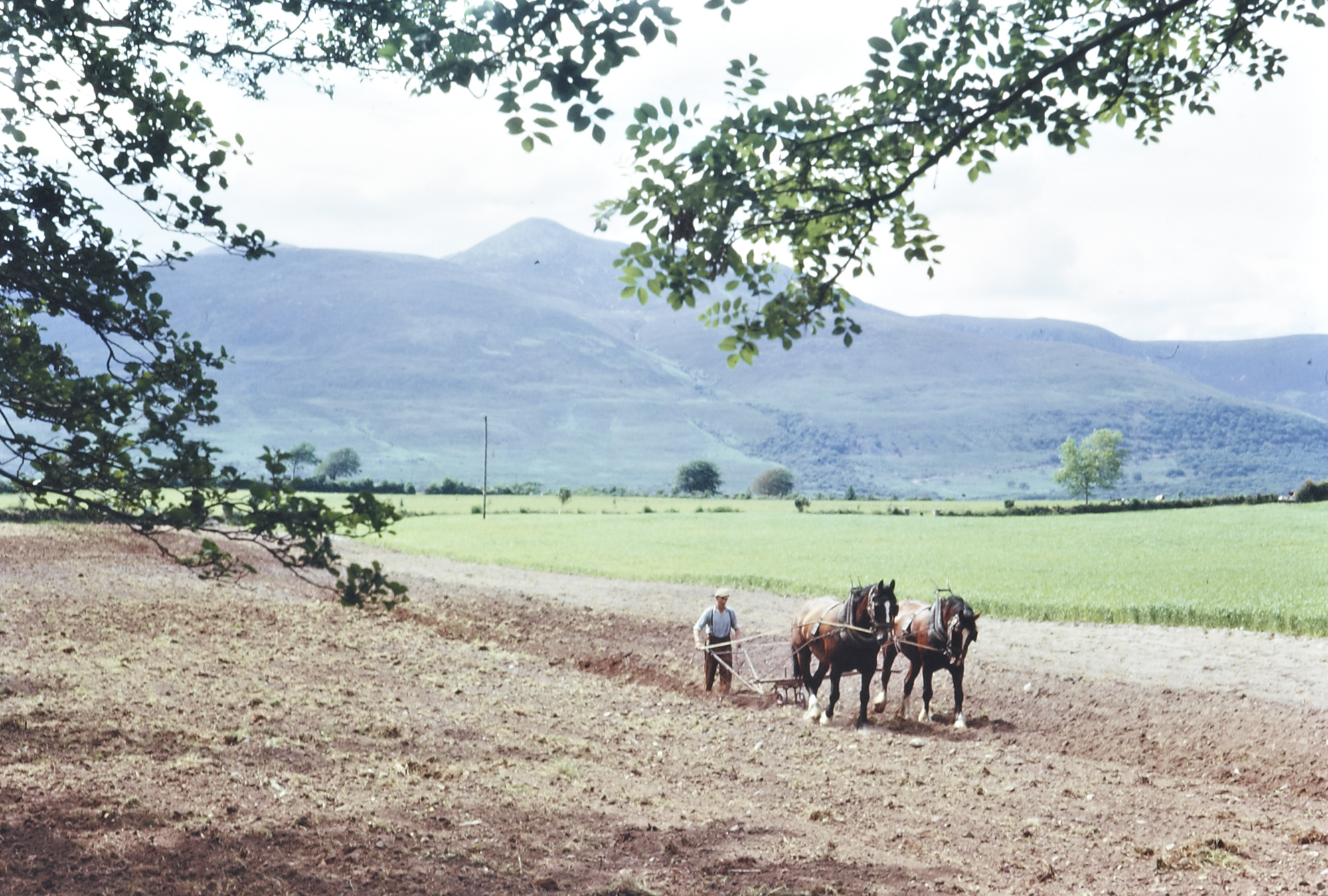 Ireland 1960s, Today sees a rare visit to the Tilbrook collection and to the Ring of Kerry. In colour no less. This lovely image of a horse-drawn plough with the sun streaming down on the furrowed ground would lighten the heart and raise our hopes! It is appropriate in its own way as today the 2017 Dublin Horse Show begins - with all the excitement, activity and of course horses galore. I hope they have a great show! Photographer: Richard Tilbrook Collection: Tilbrook Photographic Collection Date: June 1963
