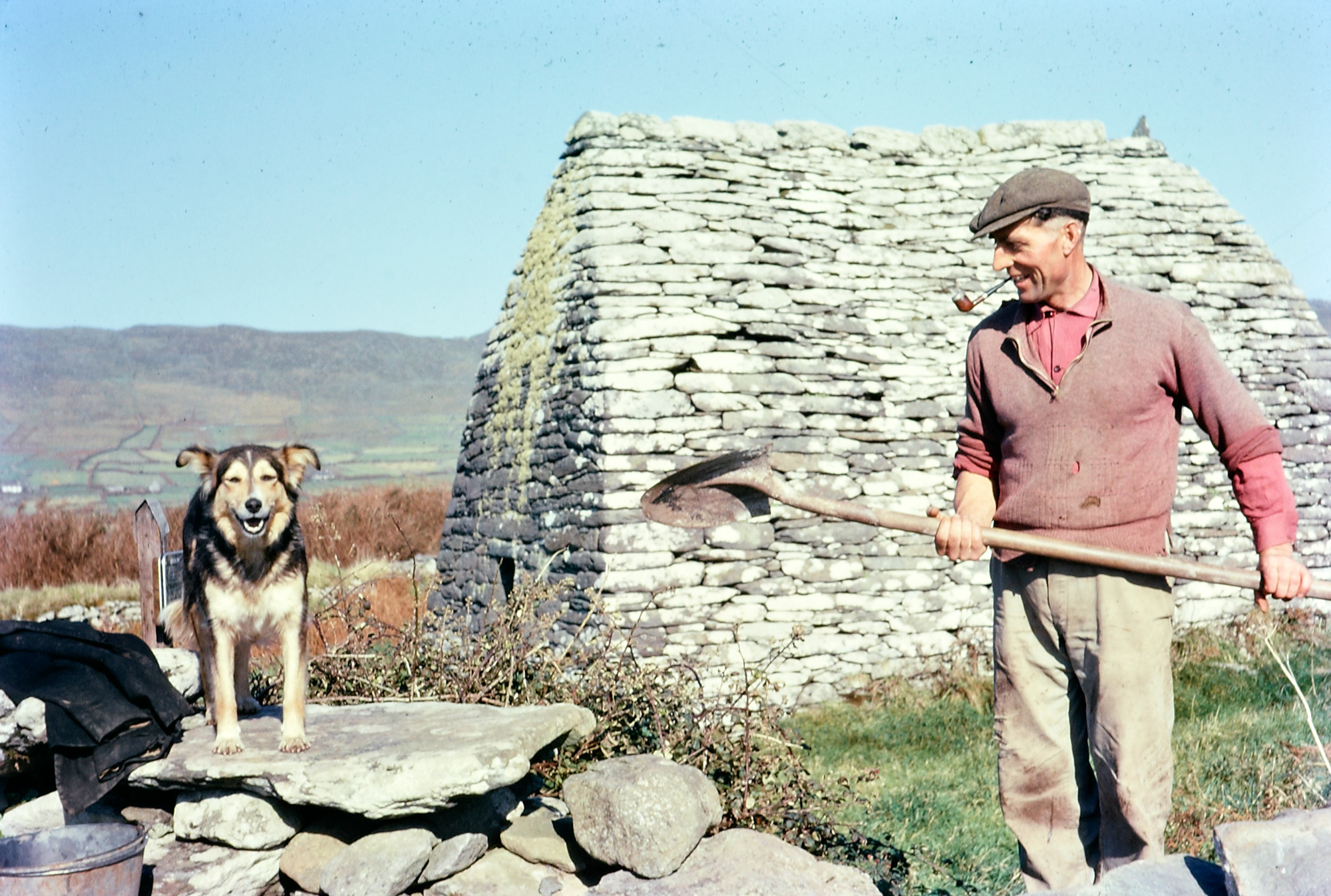 "Ireland 1960s, Thought I'd surprise you with a colour photograph today, as we haven't had one for ages. So here's one very contented looking man and his dog, working alongside the Gallarus Oratory on the beautiful Dingle Peninsula in Kerry. Any and all information on the Oratory would be gratefully received... It took a long time to put a name to the laughing face in another of our Tilbrook photos. I thought anyone who knew this man would be able to identify him, and hoped that our roving Kerry reporter Mossy Carey might get on the case, and he did: ""This is Seamus Johnson, uncle of Seamus Kelliher, who has confirmed the identity. He maintained the oratory during his lifetime."" Mossy Carey was almost beaten to the draw by Maire Oakes over on our Facebook page, who was the very first to identify Seamus. But then along came our very favourite identifier - a family member. Patrick Johnson aka Paddyj1325 says: Hi. Just heard from my brother and 2 of my sisters. They confirmed that it is indeed my Uncle Jim. I never met him but they each did when they went back over for visits. My brother Sean, who got to spend a summer with him one year at the farm, says this: ""Yup, that is him. Cool picture. He always had a dog with him. He was a very kind and gentle man. Much quieter than Da. He was paid by the government to be the caretaker of that ancient church. He used to stand up at the oratory and tell people the history of the place. People used to think he worked there and they would tip him. One last unknown fact. The history books say the church is the same as it was 1,000 years ago, untouched by man. WRONG! The stones across the top were put there by Dad's Father to keep the rain out because he kept sheep in there. Originally the top was open to let light in. Uncle Jim used to have a very old picture of the place and you could see someone added a top row. Facts you can't find in a book."" Photographer: Richard Tilbrook Collection: Tilbrook Photographic Collection Date: Around 1960"