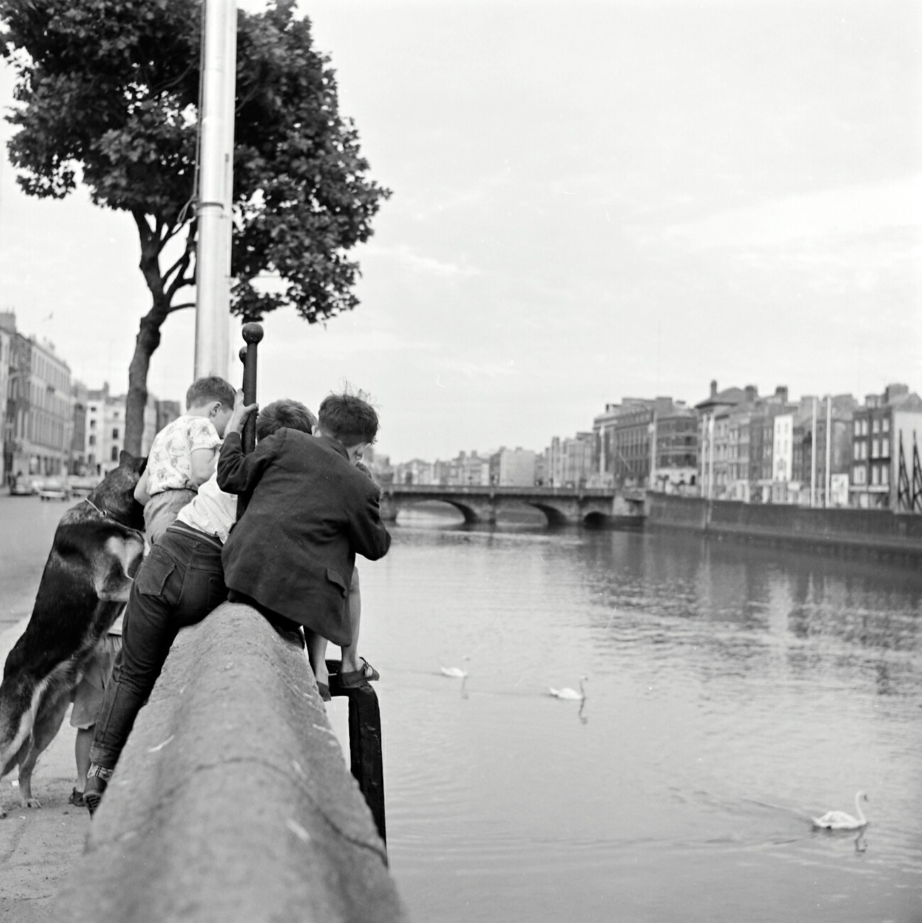 Ireland 1960s, A bunch of fascinated boys, and their equally engaged alsatian dog study something in the River Liffey at Upper Ormond Quay, Dublin. Photographer: Elinor Wiltshire Date: 1964