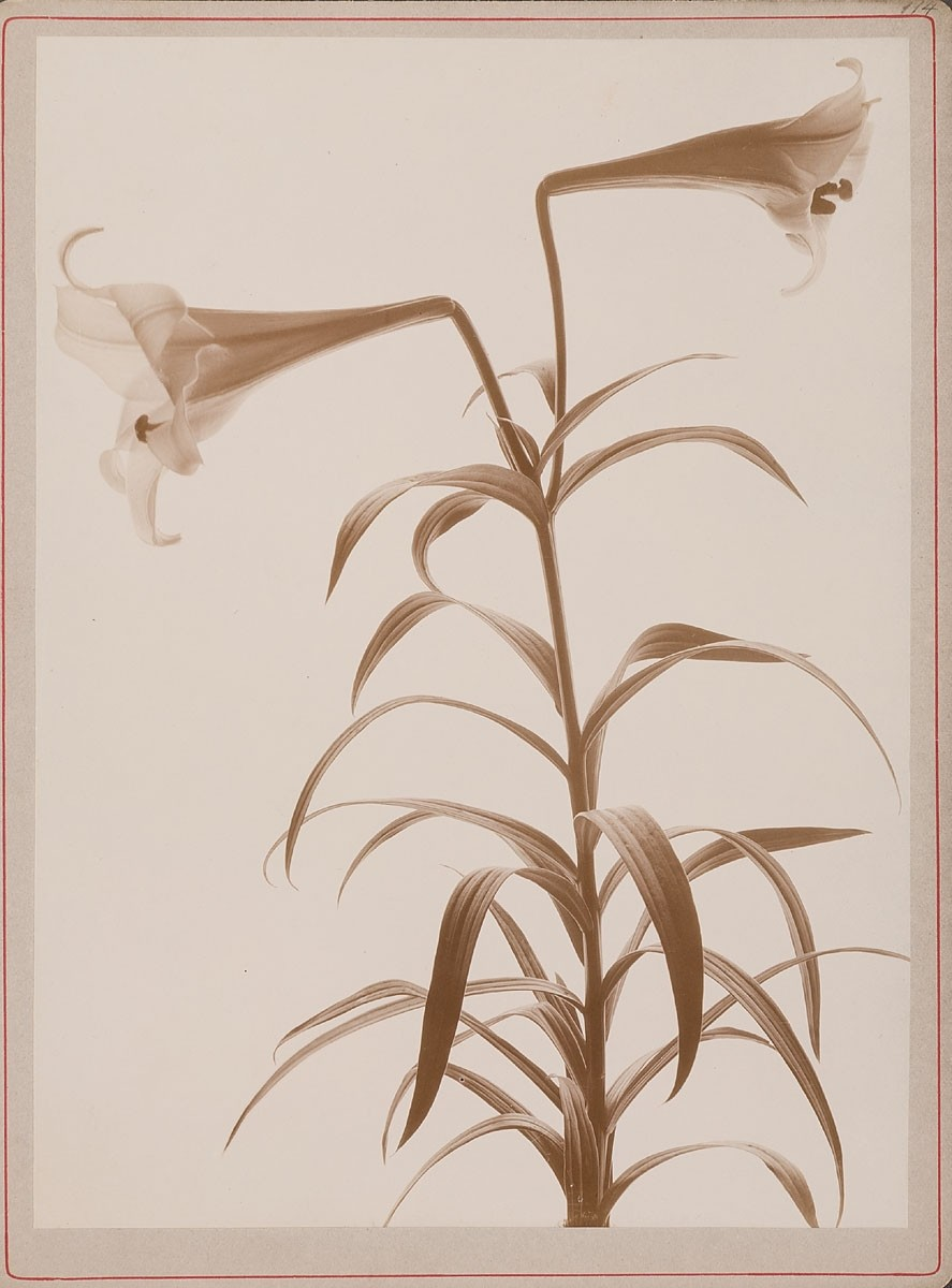 Johan Wilhelm Weimar introduces viewers to incredibly striking work from his 1901 Herbarium.