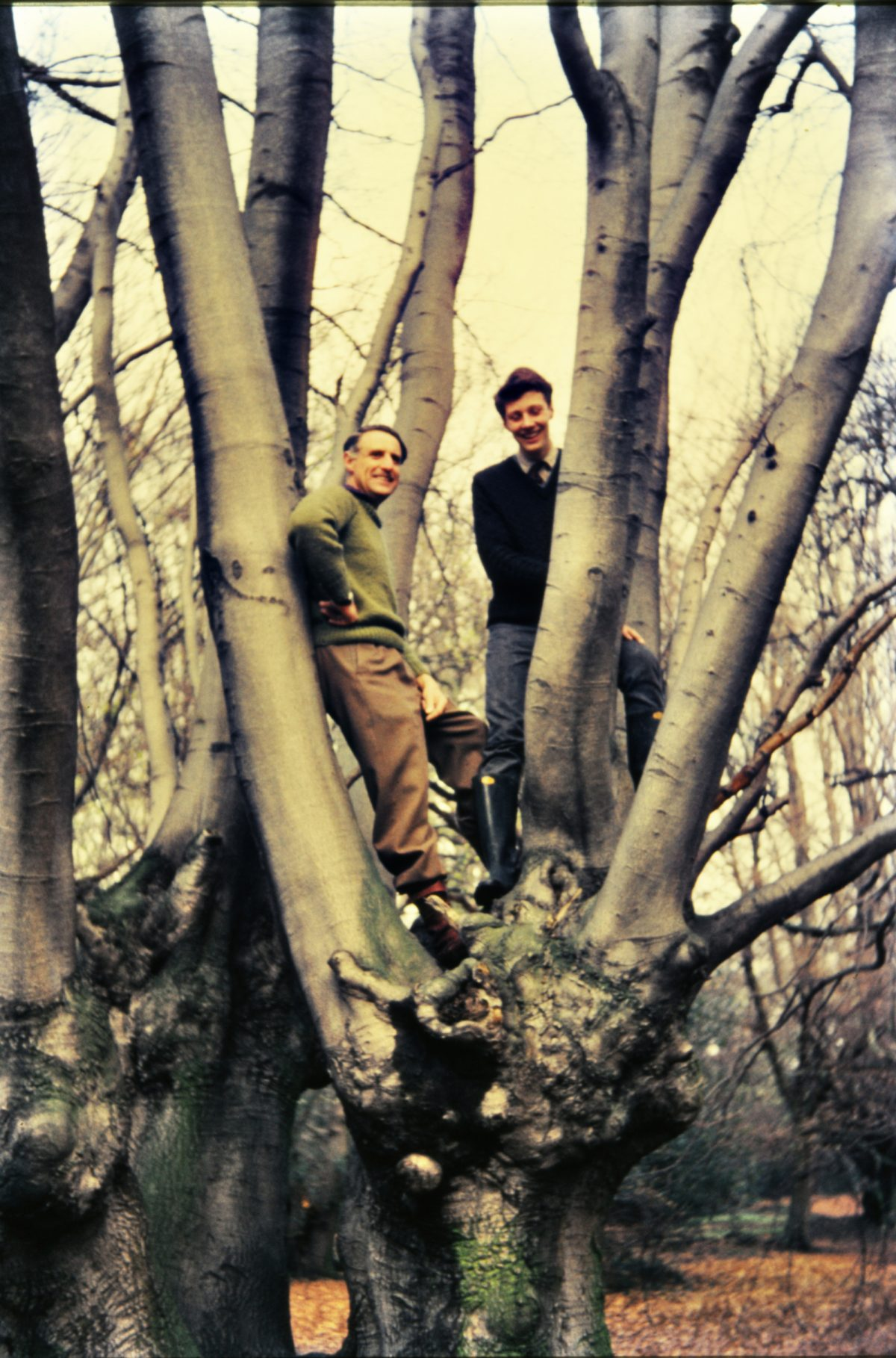 scan-men-in-tree-1964-england