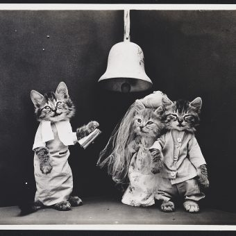 Harry Whittier Frees' Peculiar Cats
