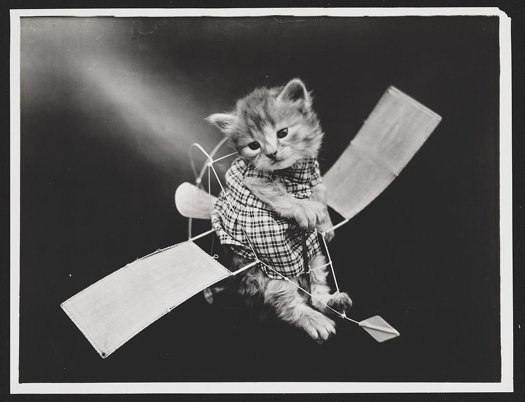 Harry Whittier Frees cats in human clothes