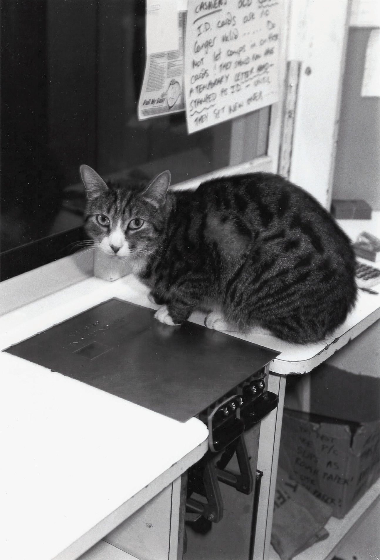 Huston, the cinema's cat, 1987 Photograph- Mair Payne