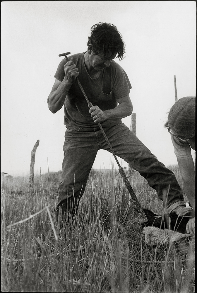 Danny Lyon Biddie Costillo, De Horning a Calf, Llanito, New Mexico, 1975
