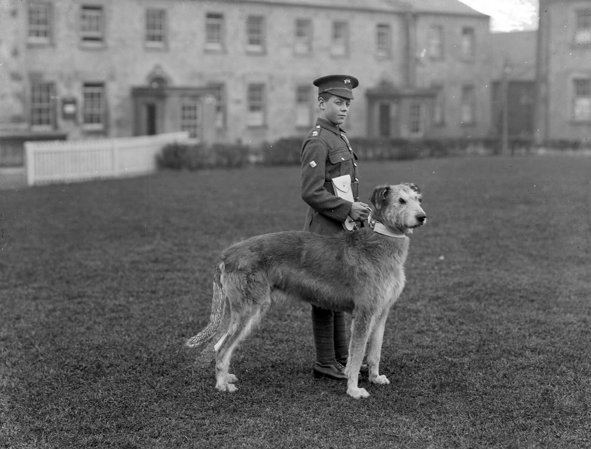 1917 A young member of the Irish Guards at Waterford Barracks with the regiment's mascot, an Irish Wolfhound.
