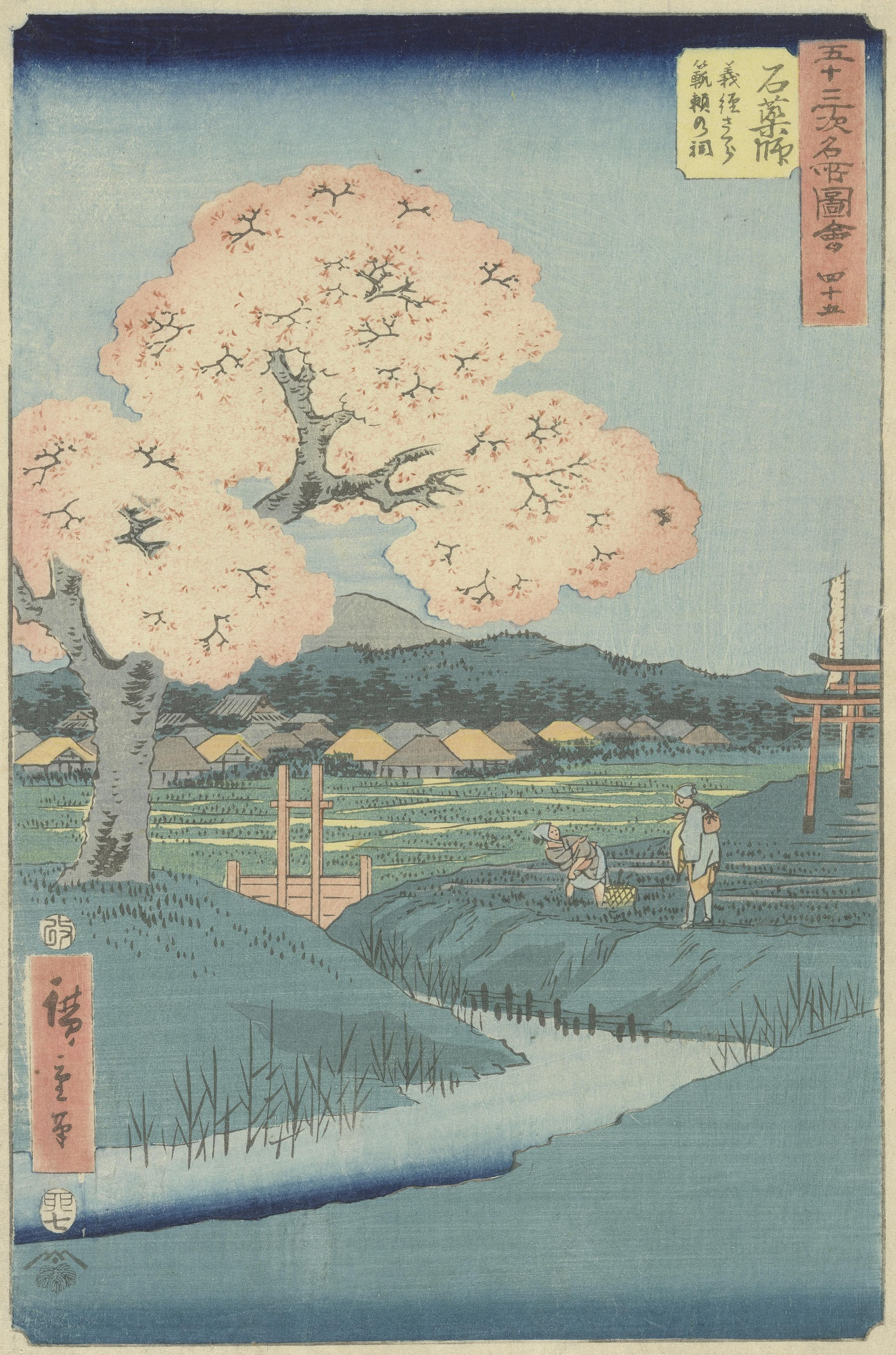 Ishiyakushi: The Yoshitsune Cherry Tree near the Noriyori Shrine, no. 45 from the series Collection of Illustrations of Famous Places near the Fifty-Three Stations [Along the Tōkaidō] Edo, seventh month 1855 Utagawa Hiroshige (1797 - 1858)