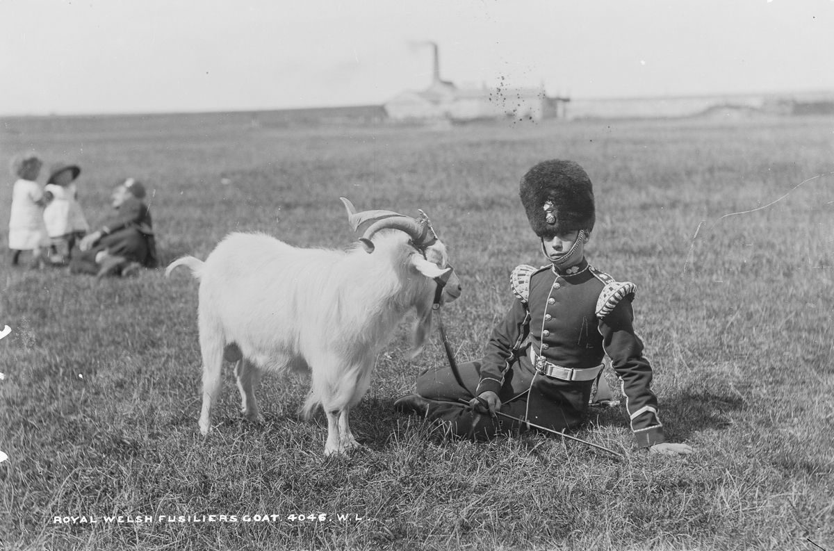 c. 1887 A Royal Welsh Fusilier with the Regimental Goat, and his strap-on crest.