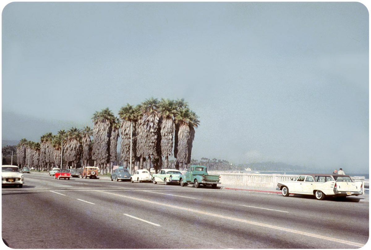 Leaving L.A. — 1962 Stretch of coastline near L.A. lined with petticoat palms.