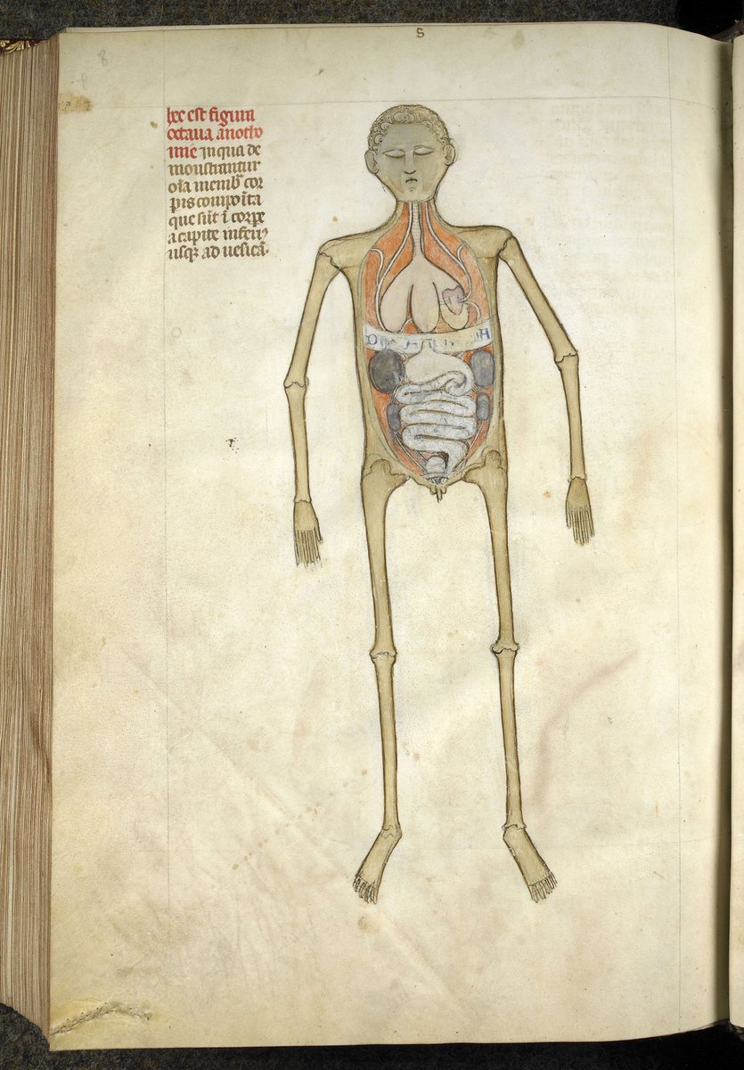 Neuroanatomical plates by Guido from Vigevano in the Anathomia Designated for Figures written in 1345,
