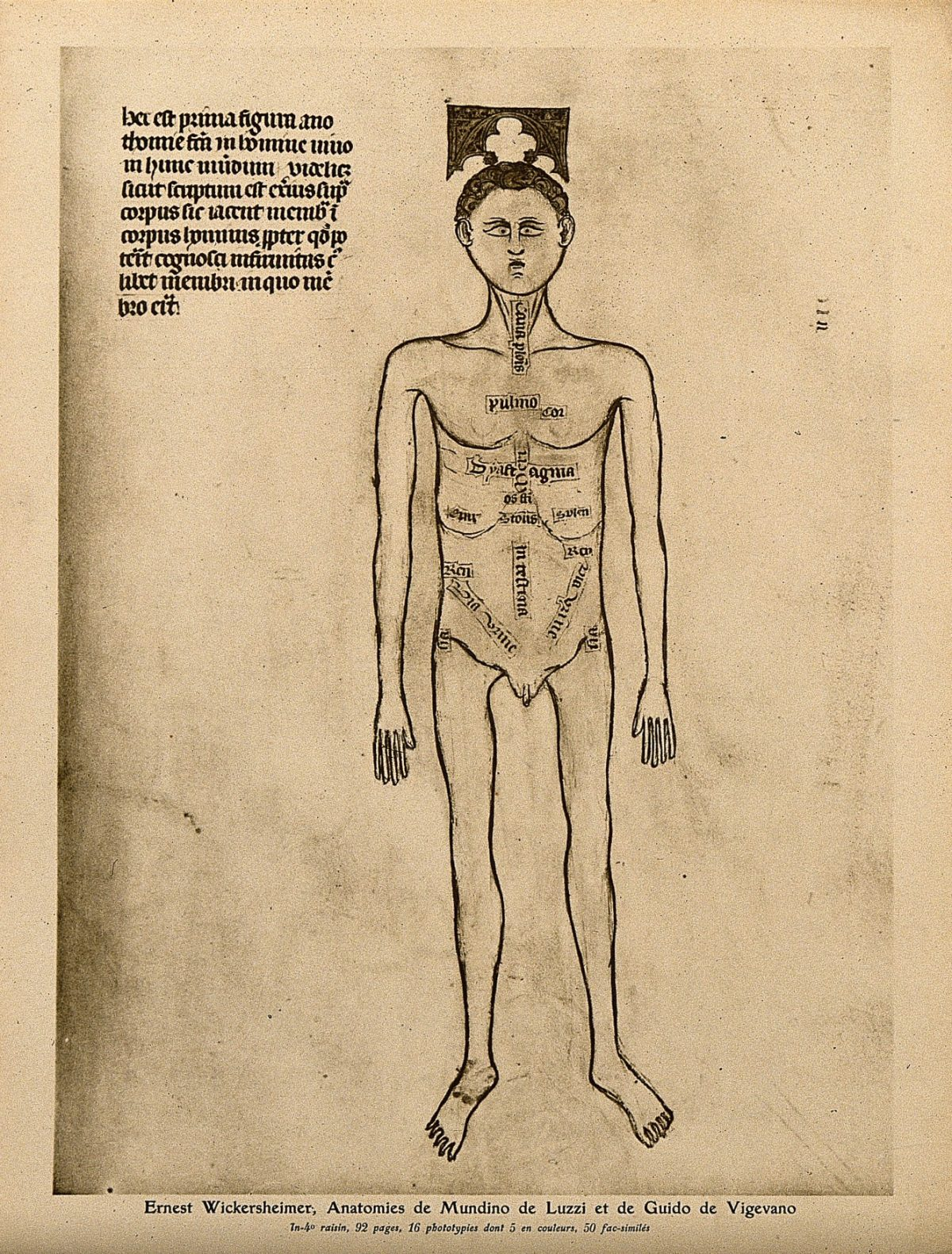 Anatomical plate from Guido de Vigevano