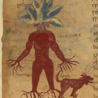 Illustrations from A 1000-Year-Old Guide to the Medicinal Use of Plants