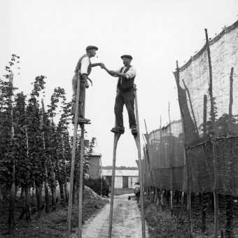 Picking Hops In Kent – 1900-1949