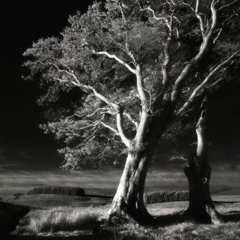 Landscape and Silence: The Beautiful Photography of Michael Prince