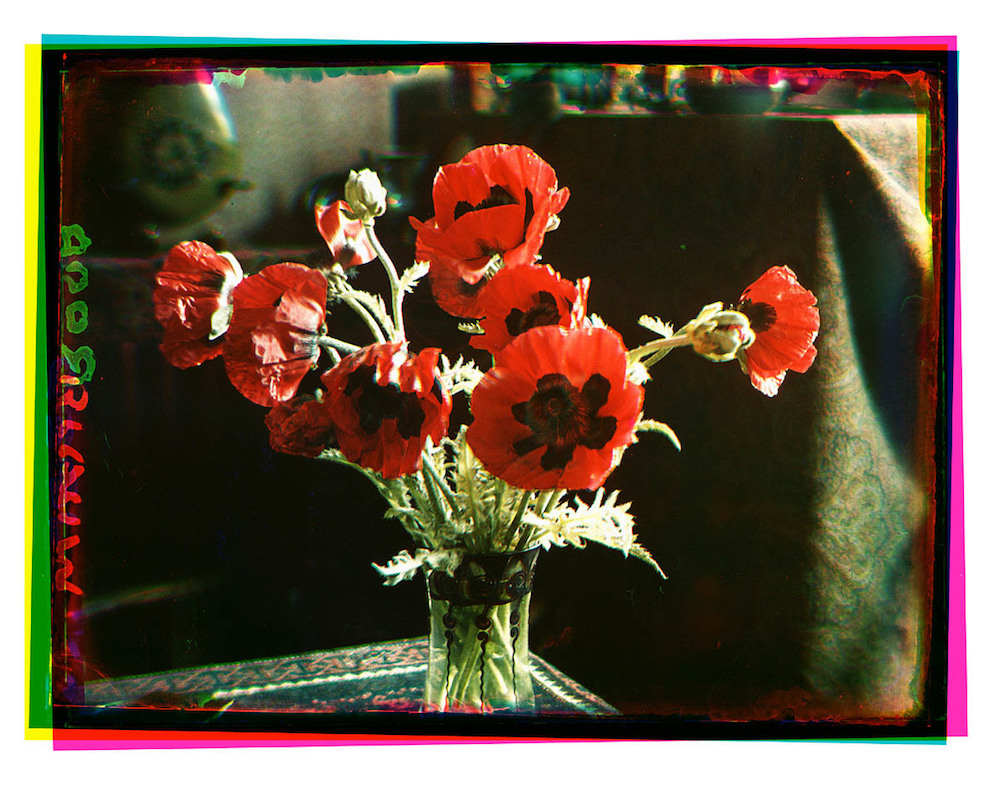 Bernard Eilers, flowers, still life, photography
