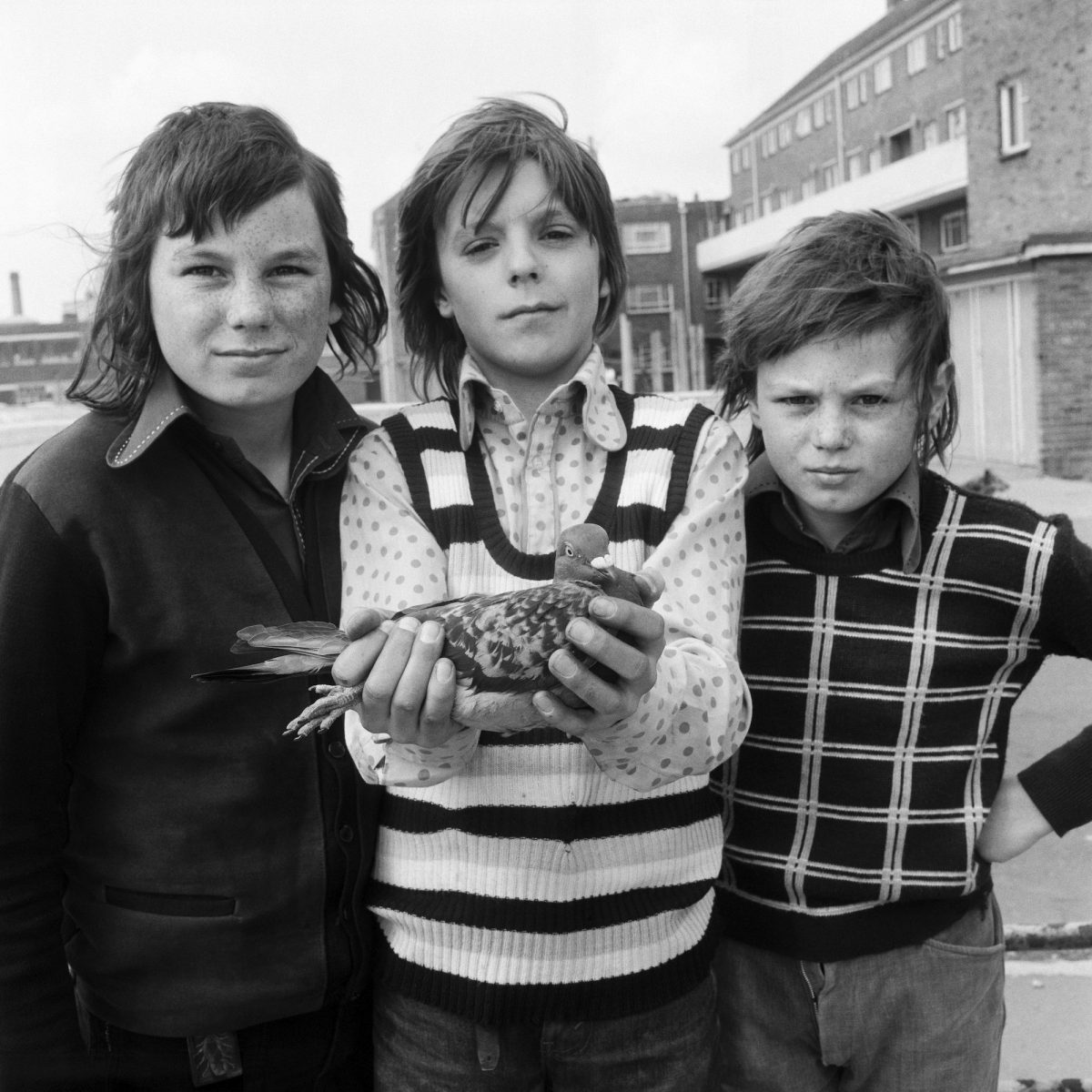 John Payne, aged 12, with friends and his pigeon Chequer. From the Free Photographic Omnibus. Portsmouth, Friday 26 April 1974.