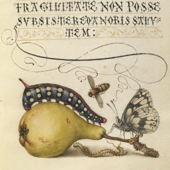 The Model Book of Calligraphy – An Illuminated Masterpiece (1591 – 1596)