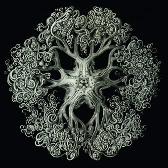 Gorgeous Prints Of Ernst Haeckel's Illustrations of Microscopic Life