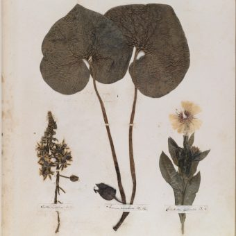 Emily Dickinson's Herbarium: A Poetic Treasury of Life