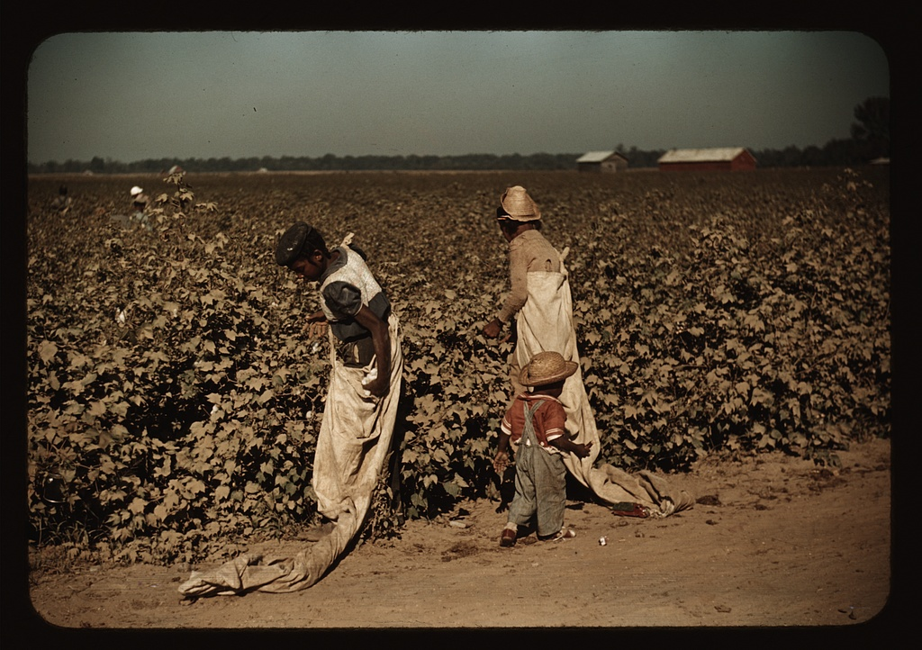 Day laborers picking cotton, near Clarksdale, Miss. Contributor Names Wolcott, Marion Post, 1910-1990, photographer Created / Published 1939 Nov.