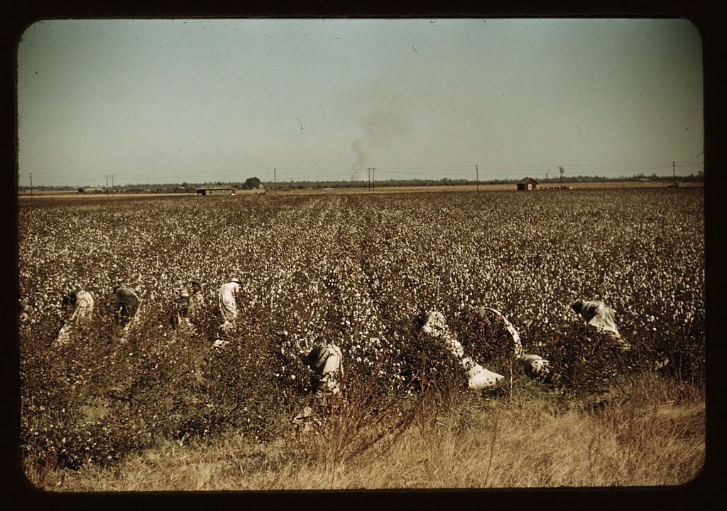 Day laborers picking cotton, near Clarksdale, Miss.