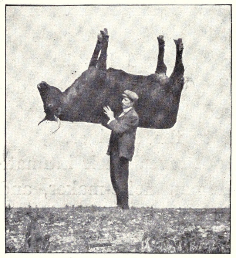 """Shouldering the imitation ox"", from a 1909 edition of Richard Kearton's Wild Nature's Ways"