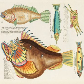 Louis Renard's Superb Illustrations of the East Indies Marine life He Never Saw