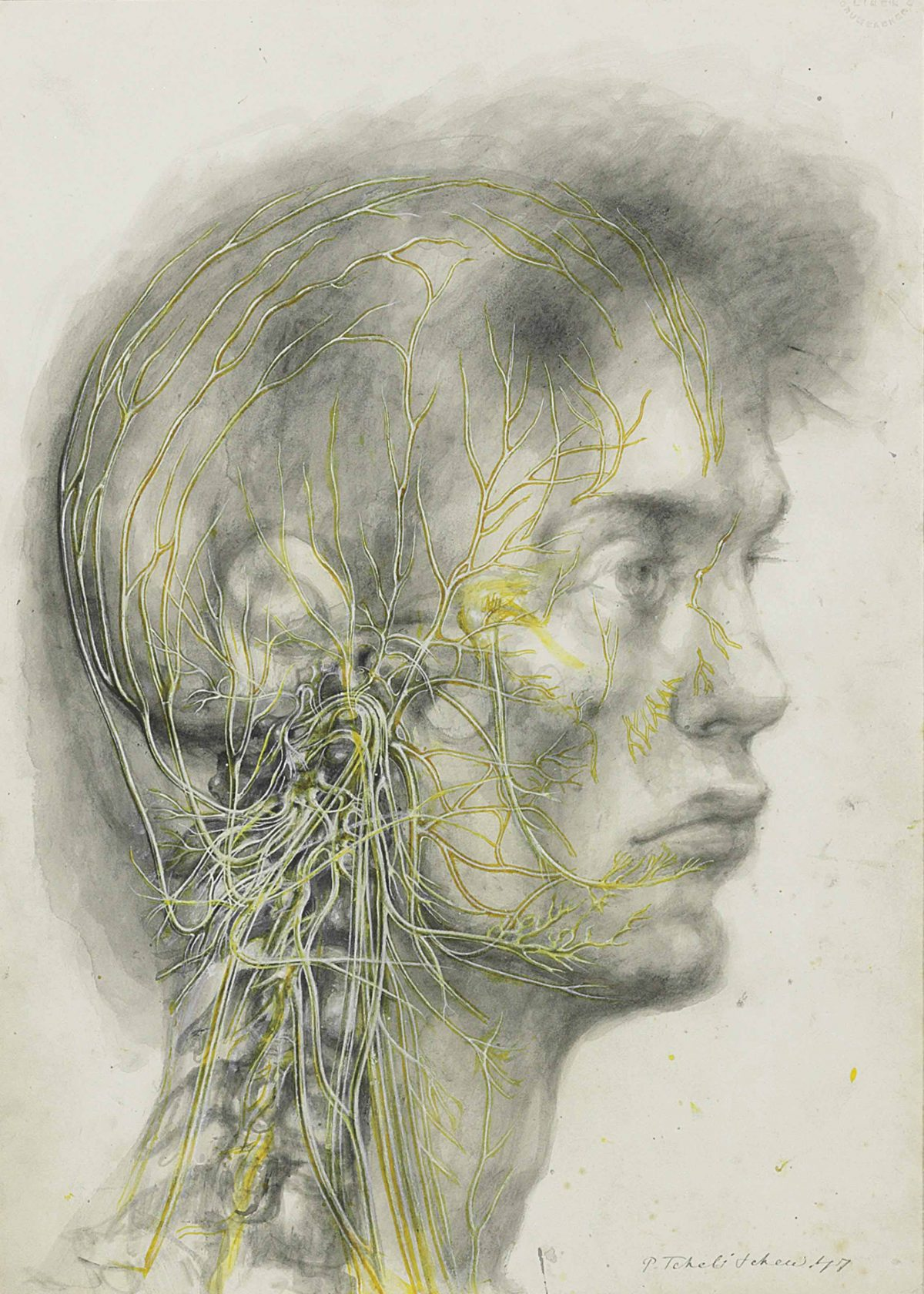Pavel Tchelitchew (1898-1957) Anatomical Head with Yellow