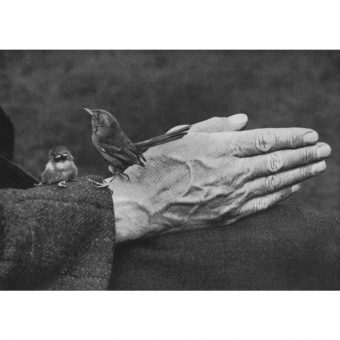 Richard and Cherry Kearton – Two Wildlife Photography Pioneers, Baby Birds And One Stuffed Ox